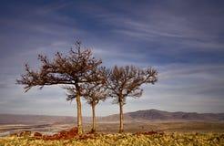 Three bare trees. Russia, South Ural, Kutantau ridge near city Magnitogorsk stock image
