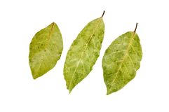 Three bay leaves Stock Images