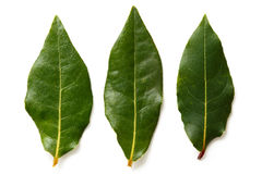 Three bay leaves isolated on white. Royalty Free Stock Photo