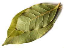 Three bay leaves on white. Macro bay leaf spice for cooking prepared on a white background Royalty Free Stock Photos