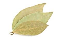 Three bay leaves Stock Photos