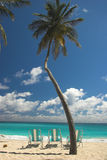Three beach chairs, a Palm Tree and blue green waters Royalty Free Stock Image
