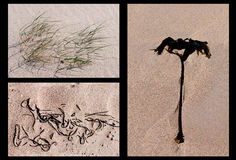 Three beach and plant details on sand Stock Photo