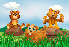 Three bears in the field Stock Image