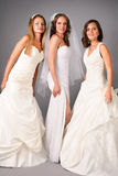 Three beautiful brides posing in studio Royalty Free Stock Image
