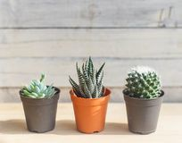 Three cactus against wood Royalty Free Stock Photography