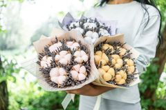 Three beautiful and different bouquets lavender with cotton in woman hands . dried flowers lilac color. placed in a. Paper bag royalty free stock photos