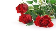 Three beautiful maroon roses with decoration Stock Photos
