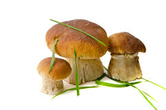 Three beautiful mushroom Stock Photo