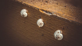 Three beautiful patterned shells snails clung to a tree Royalty Free Stock Photos