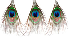 Three beautiful peacock feather Royalty Free Stock Photo