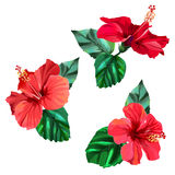 Three beautiful red hibiscus flowers with leaves. Watercolor effect. Vector illustration in eps10 format Stock Images