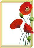Three beautiful red poppies in the frame. Beautiful flower  illustration of red poppies in the frame. Design elements Royalty Free Stock Photos