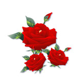 Three beautiful red rose Stock Photography