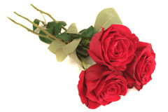 Three beautiful red roses. Lay on a white background Stock Photos