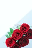 Three beautiful red roses Stock Images