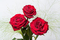 Three beautiful red roses with green leaves Stock Photo