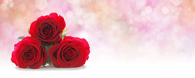 Three Beautiful Red Roses Website Header Royalty Free Stock Photography