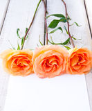 Three beautiful roses with card for your text. Royalty Free Stock Photography