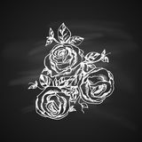 Garden roses Royalty Free Stock Image
