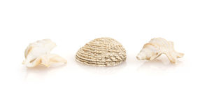 Three beautiful sea shells Stock Image