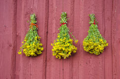 Three beautiful St Johns wort medical herb bunch on red wall Royalty Free Stock Images