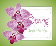 Three Beauty Purple Orchids over a Seasonal Card, Vector Illustration Royalty Free Stock Photo