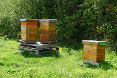 Three Beehives on the Grass. Three beehives on the green grass in the field royalty free stock photos