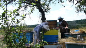 Three beekeeper inspects a hive of bees before pumping honey from the honeycomb in the garden stock video