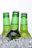Three Beer Bottles in Ice bucket Royalty Free Stock Photo