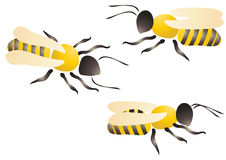 Three bees Royalty Free Stock Photography