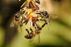 Three Bees Stock Images