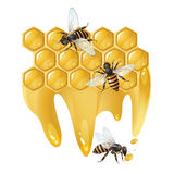 Three bees and honeycombs Royalty Free Stock Images
