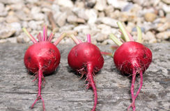 Three beetroots Stock Photos