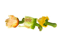 Three bell pepper cores Royalty Free Stock Image