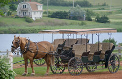 Three bench seat Horse Carriage Royalty Free Stock Images