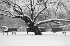 Three benches Royalty Free Stock Image