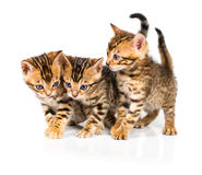 Three Bengal kitten with reflection on white Royalty Free Stock Images