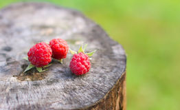 Three berries raspberries Stock Photos