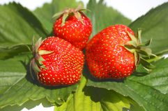 Three berries of  strawberry Stock Images