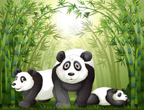 Three big bears at the rainforest Royalty Free Stock Photo