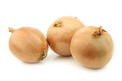 Three big brown onions Royalty Free Stock Image