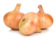 Three big onions on white Stock Image