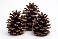 Three big pine cones Royalty Free Stock Image