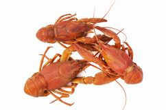 Three big red boiled crawfish. Isolated; Company of three crayfish Stock Photos