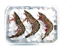 Three Big Sea Tiger Prawns. On steel Tray with ice viewed from Top stock photography
