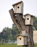 Three Bird Houses Royalty Free Stock Images