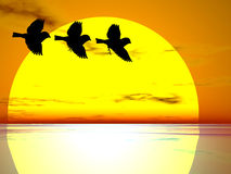 Three birds. Silhouetted against a large sunset Royalty Free Stock Photos