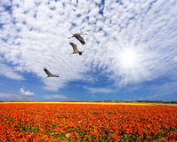 Three birds in the cirrus clouds Royalty Free Stock Images