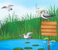 Three birds at the pond with a signboard Royalty Free Stock Image